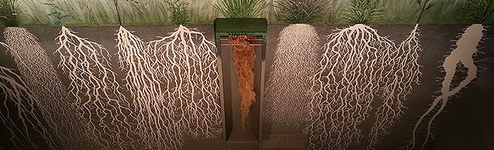 Cerro Gordo root display