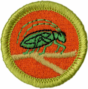 Insect Study Merit Badge Patch
