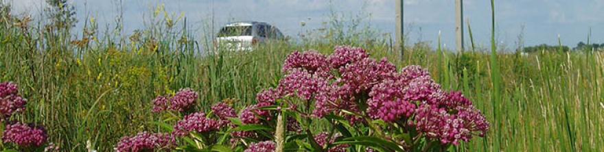 Native roadside vegetation
