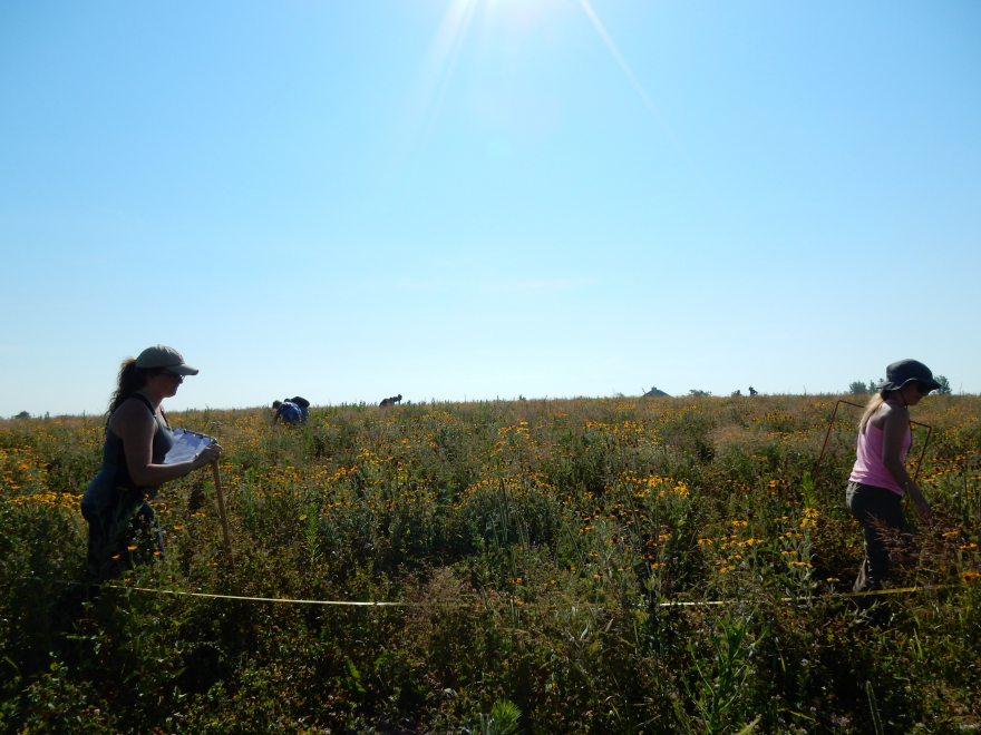 students surveying vegetation along a transect