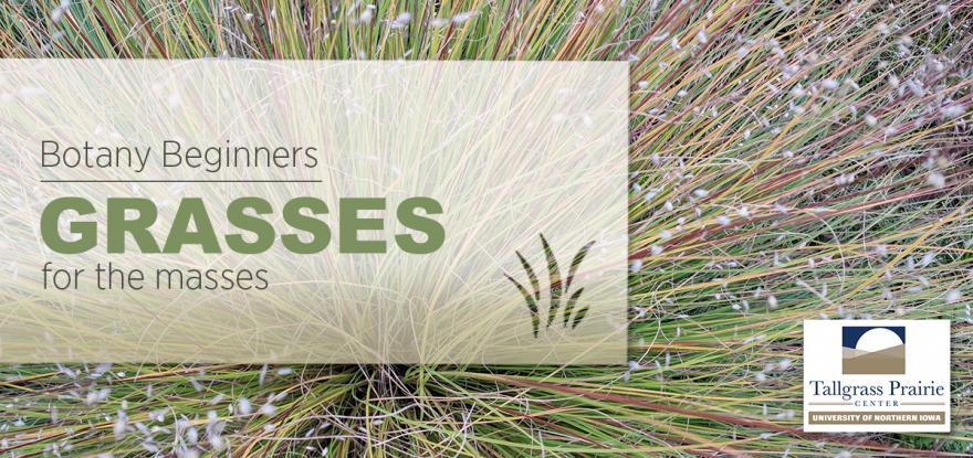 Botany Beginners 2021 - Grasses for the Masses