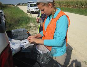 UNI graduate student working at roadside research site