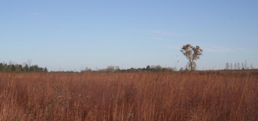 Cedar Hills Sand Prairie