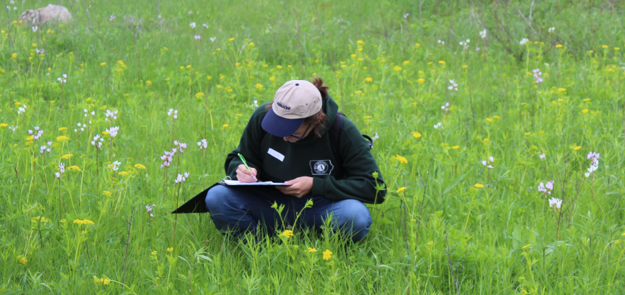 Man taking identifying plants in a prairie.