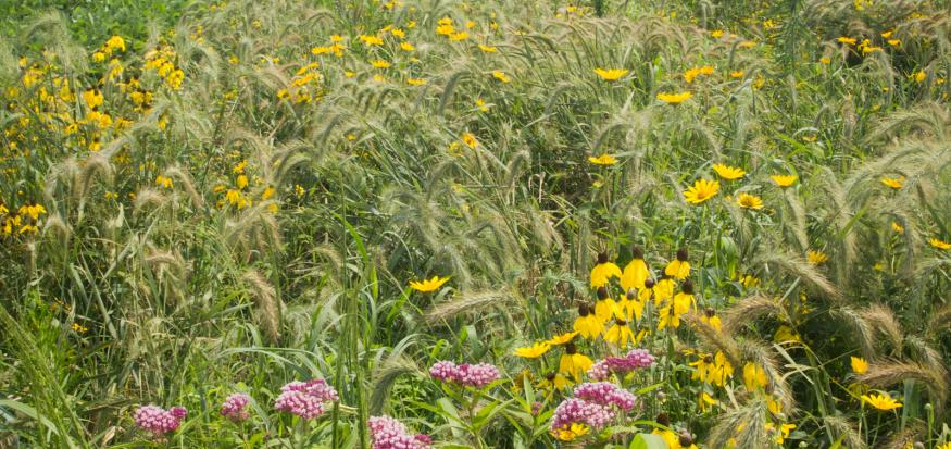 This diverse infield prairie strip is located on a farm in Benton County, Iowa.