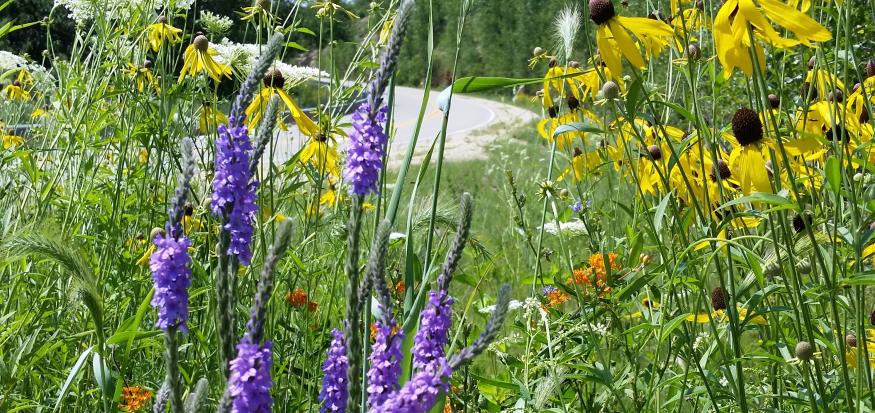 Roadside planting in Winneshiek County